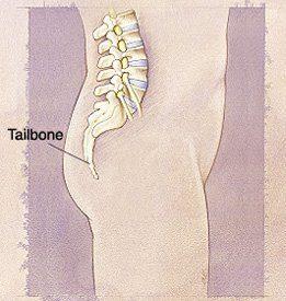 [Image: Human-Tailbone.jpg]